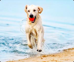 Cuidados para tu perro en verano